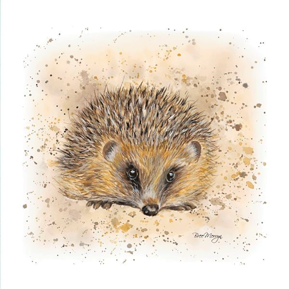 Hedgehog Gift Card